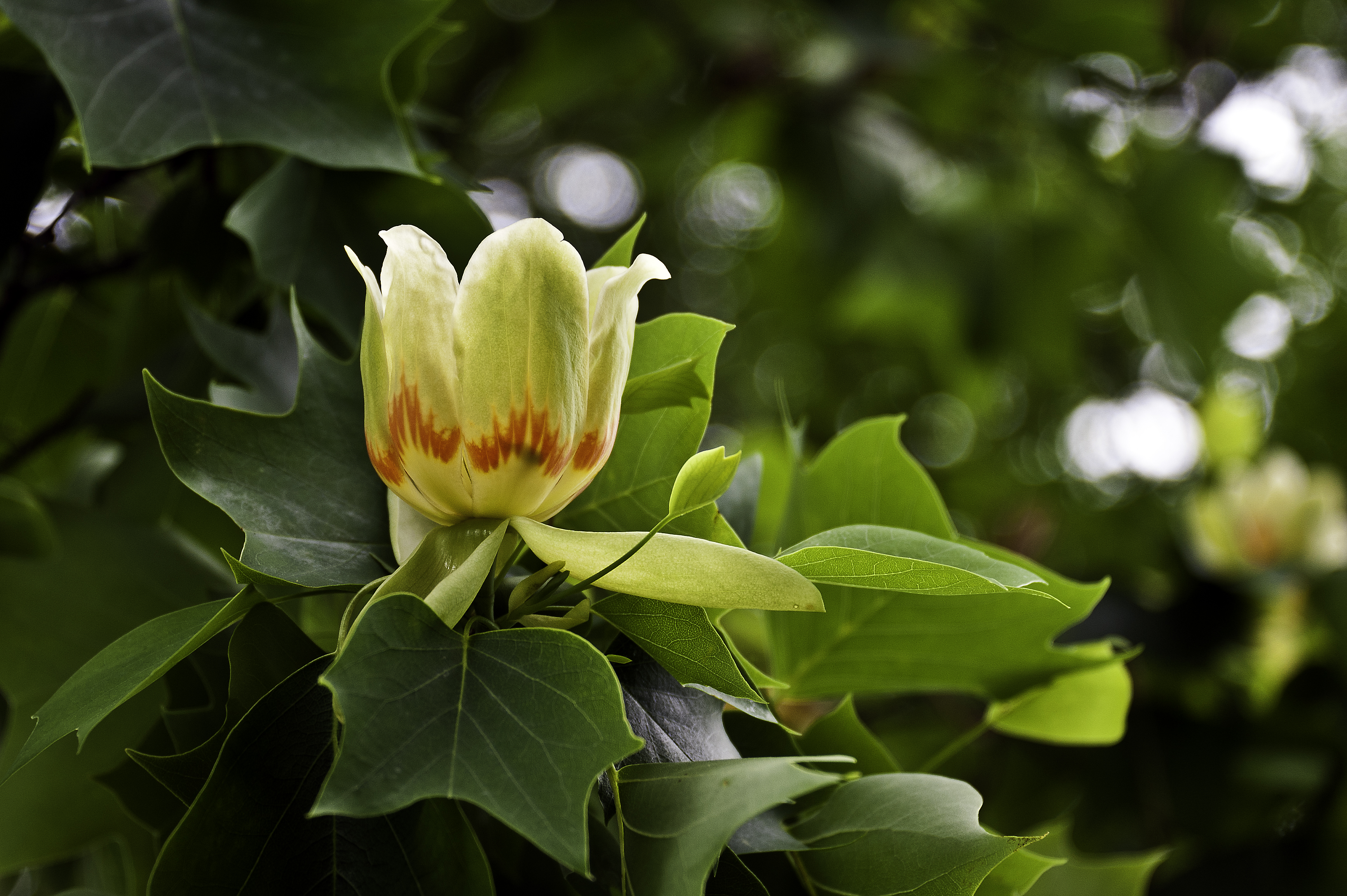 Spring in northern virginia stephen l tabone nature photography we mightylinksfo