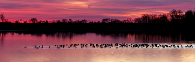 Sunset at Bombay Hook NWR with Ducks