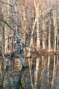 Beaver-Pond-2