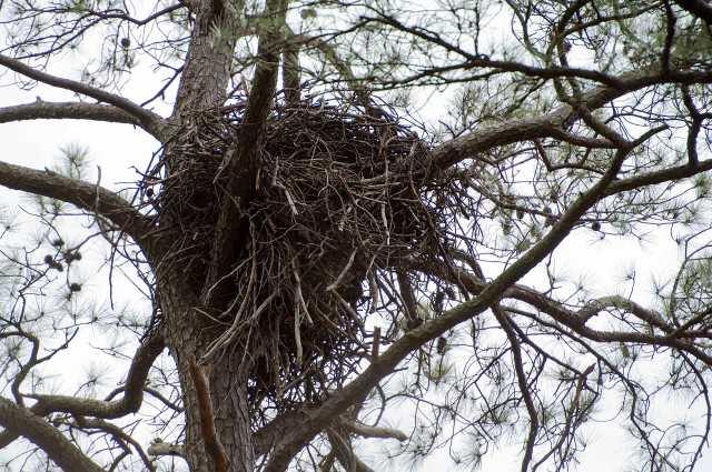 Eagle-Nest-BNWR