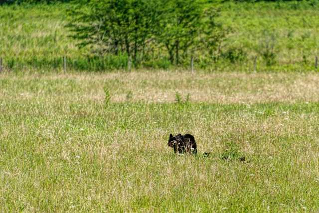 Black-Bear-and-Her-Three-Cubs