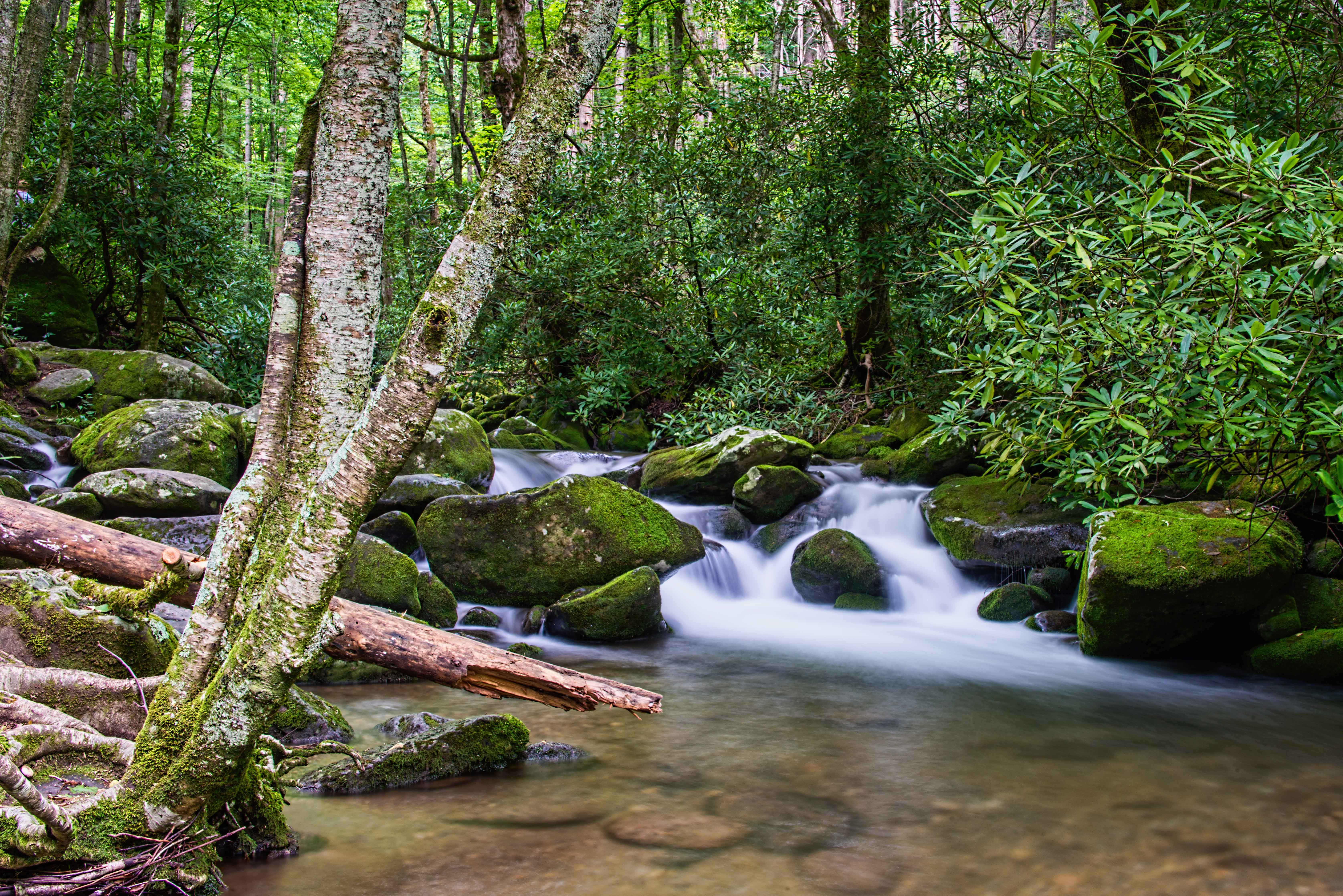 Great smoky mountains stephen l tabone nature photography for Roaring fork smoky mountains