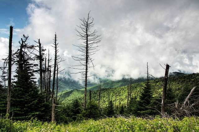 View-from-Clingmans-Dome-3