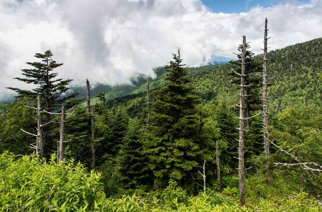 View-from-Clingmans-Dome-4