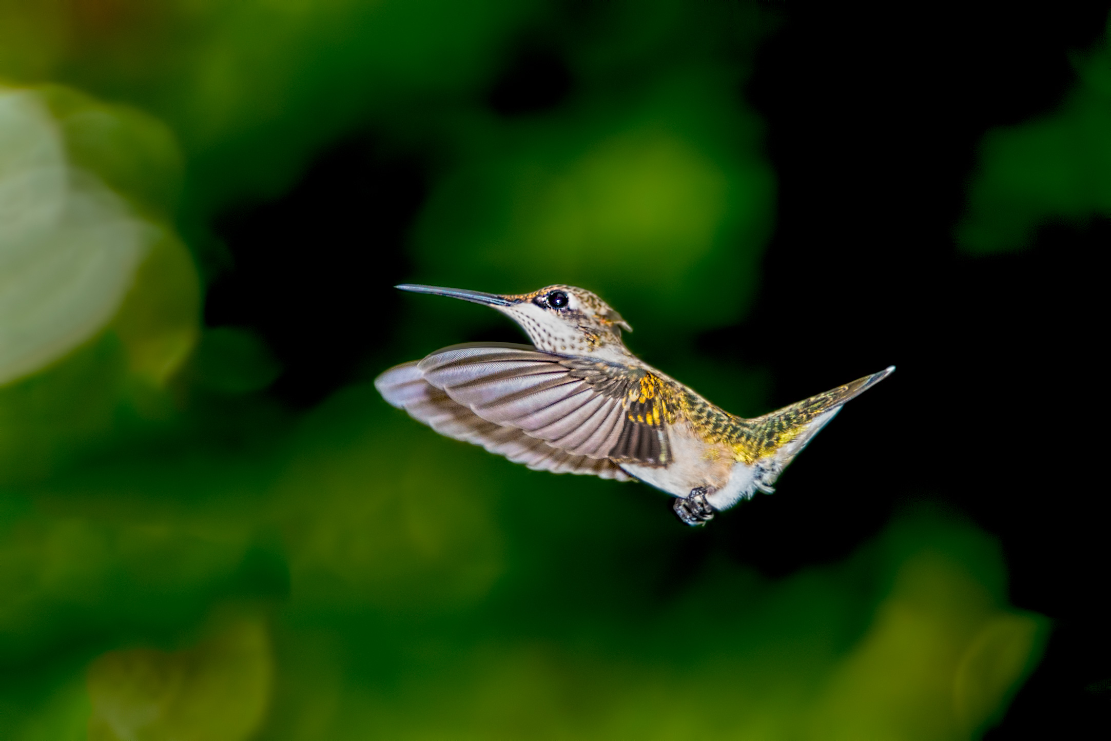 Colorful hummingbirds flying - photo#27