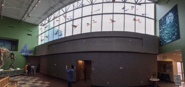 Sandhill Cranes at FL Museum 2