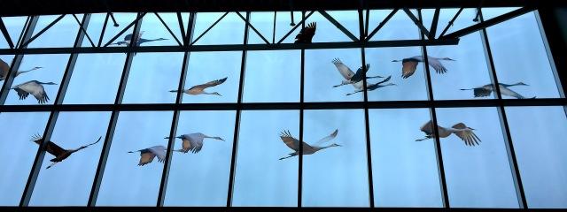 Sandhill Cranes at FL Museum