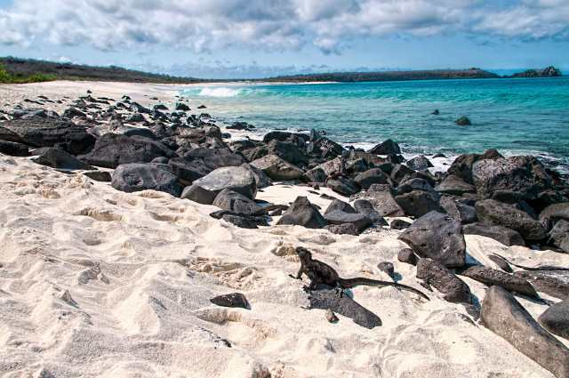 Espanola-Island-Beach-with-a-Marine-Iguana-Sunbathing