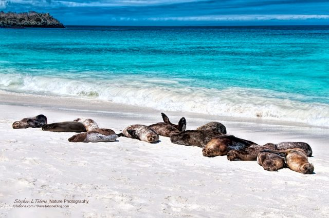 Sea-Lions-Sunbathing-on-Espanola-Island-Galapagos-wL