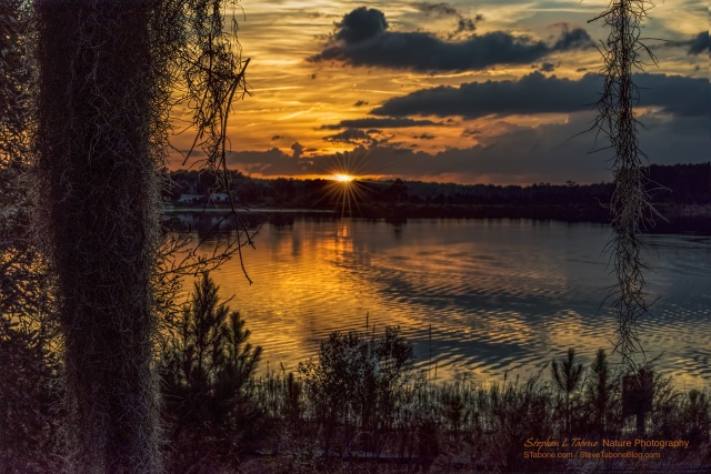 Mill-Dam-Lake-Ocala-D810-3200