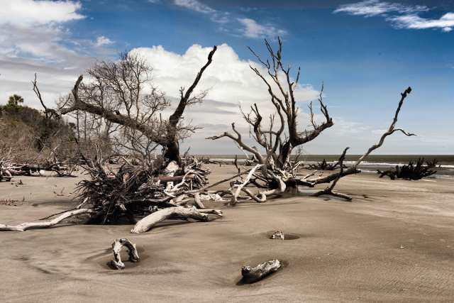 Boneyard-on-Bulls-Island-SC-1