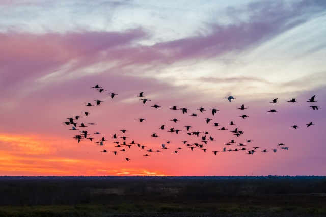 ibis-on-the-prairie-at-sunset